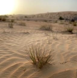 freetoedit desert grass nature wild