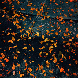 heypicsart autumn leaves golden iphone nature street season beautiful beauty onlygoodvibes goodvibes leaf autumnvibes