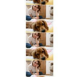 doggie collage instastory