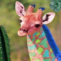 giraffe colorful colorfulgiraffe cactus tropical freetoedit