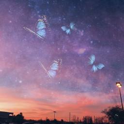 freetoedit butterflies butterfly sky sunset galaxy pinkclouds stars madewithpicsart picsart