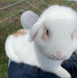 freetoedit bunny flocke cute