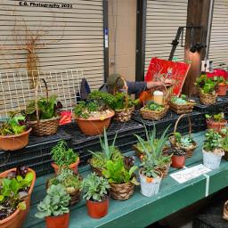 plants4sale farmersmarket artistatwork photography egphotography2021