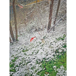 plant nature tree day winter nopeople flower snow cold trunk outdoors growth freshness land closeup cat snowing