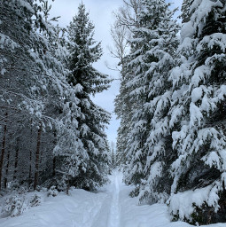 freetoedit winter latvia bestofbaltics forest snow cold hiking