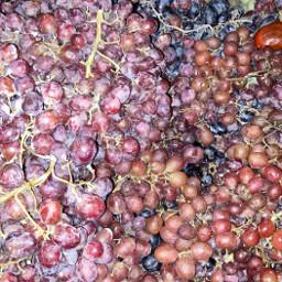freetoedit grapes pcfavoritefruitsandveggies favoritefruitsandveggies