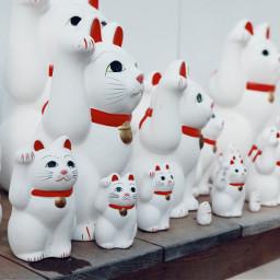 freetoedit manekineko neko japan cats