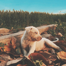 freetoedit puppy nature combination cute pose leaves