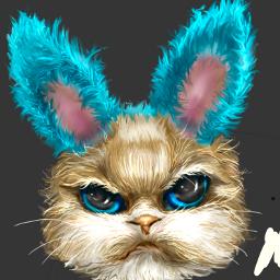 cat catlover gatosbonitos