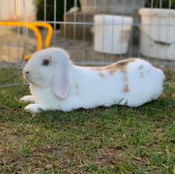 freetoedit doit bunny cute
