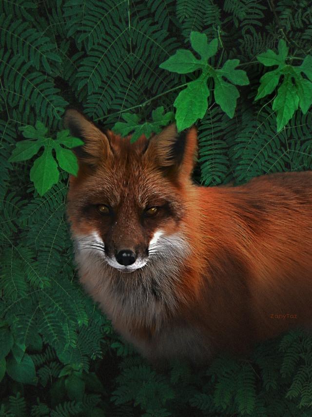 #photomanipulation of #fox & #leaves 🌿 #edit using @macmmaya #green background. #stickers #freetoedit