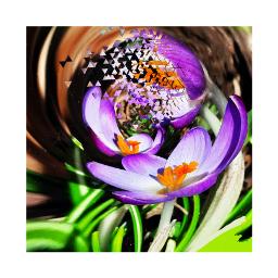 flower edit freetoedit