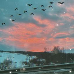 freetoedit sunset birds oldphotoeffect brushtools