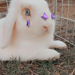 flocke bunny cute freetoedit