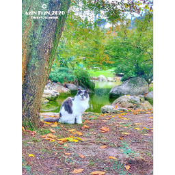 freetoedit pet cat animal trees plants nature nopeople outdoor garden paradise green ground leaves looking lake
