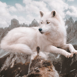 snow ice animal wolf surreal giant effect edit myedit aesthetic beauty beautiful white nature mountains fog clouds sky blue create creative picsart fantasy freetoedit