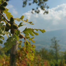 naturephotography naturelovers fruta natural magical pcfavoritefruitsandveggies daylight scenery freetoedit
