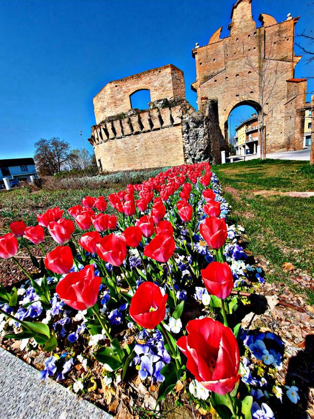 #fioribelissimi #tulipanisorridenti #coloreffect #rossofuoco #lanaturaleza #solar #bellobellobello