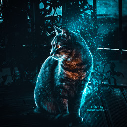 followmeplease cat night dark darkness blue white yellow orange madewithpicsart picoftheday room followme freetoedit