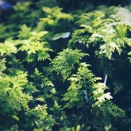freetoedit forest floor forestfloor green fern plant plants grow little macro closeup magic natural naturesbeauty naturephotography canonpowershotg5x