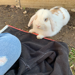 freetoedit flocke bunny cute chilling