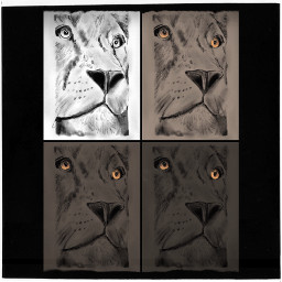 freetoedit lion mydrawing collage charcoal