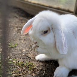 freetoedit bunny kastrieren flocke cute white