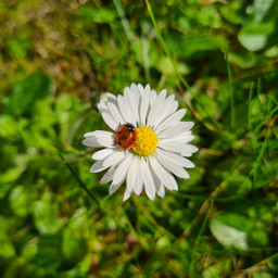 spring flowers ladybug macro photography nature