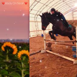 jump mady horse freetoedit