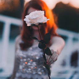 rose flower girl woman sunset freetoedit