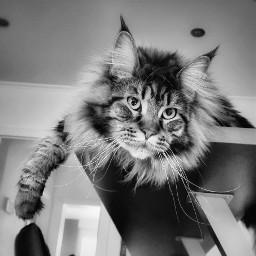 cat catlover pet katze katzenliebe freetoedit