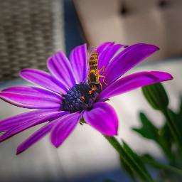 flower nature blume blumenliebe photography freetoedit