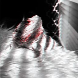 freetoedit lozard blackandwhite glitch