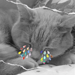 freetoedit sandy challenge tears cat rcpaperdrops