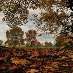 fall nature trees
