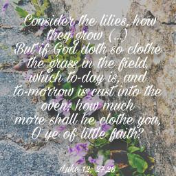 biblequote flowers luke12