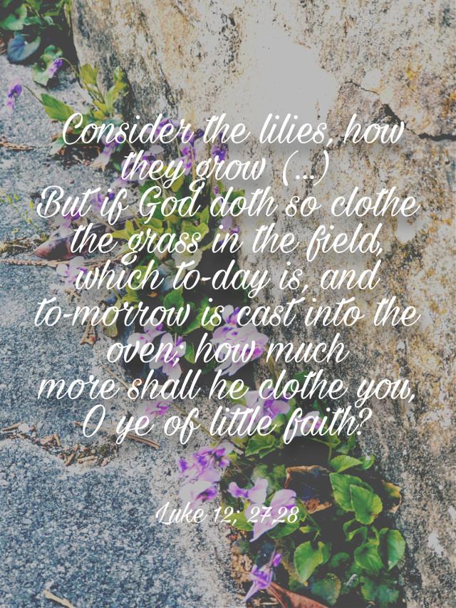 #biblequote #flowers #luke12