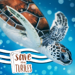 freetoedit picsart eccolorfulwaves colorfulwaves turtle