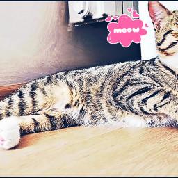cute cat sleep meow catlove freetoedit