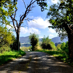 path trees urdaibai outdoors landascape