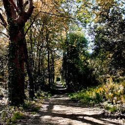 path hiking ruralwalking forest shadows