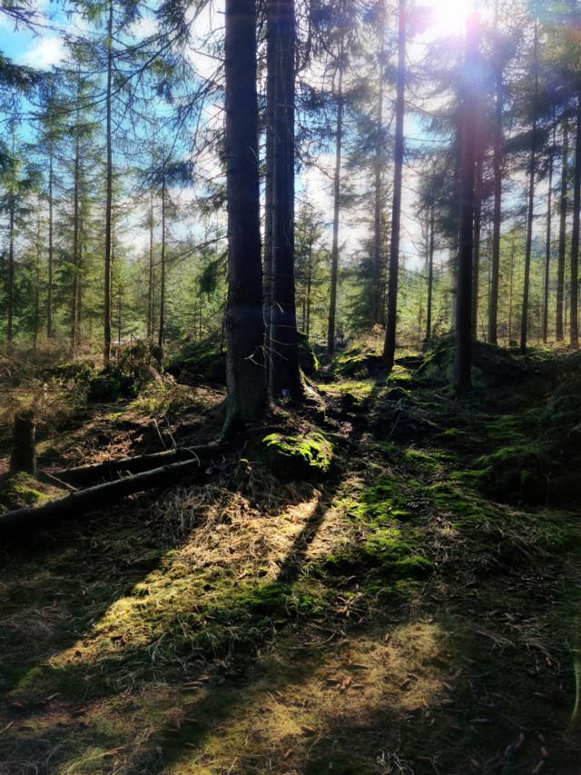 #springtime #forest #woodland #sunnyday #beautifulday #beautifulnature