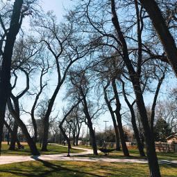 freetoedit trees park