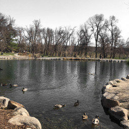 freetoedit pond ducks park
