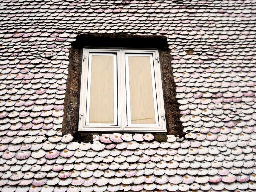 #shells #window #myphotography #nature #lungo il cammino di Santiago..la conchiglia è un simbolo del cammino..#spagna #galicia ..  I do not participate in the challenge