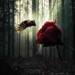 cat bee rose forest mutant nature flower insect dark glow