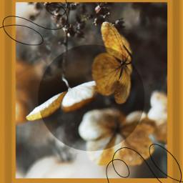 yellow żółty flower collage line blackline photoedit photo freetoedit