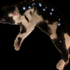 surpised hungrycat freetoedit