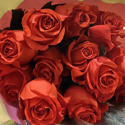 freetoedit myphoto flowers flowerphotography flowerpower roses beautiful love rosasrojas