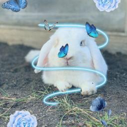 blue bunny flocke cute freetoedit